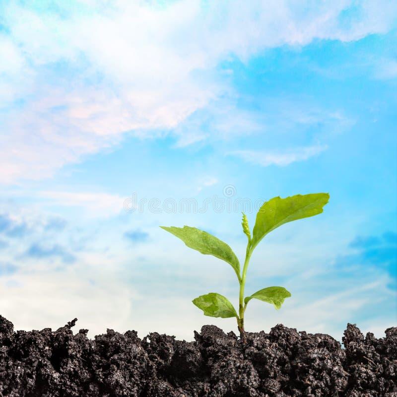 Crescimento vegetal fotos de stock royalty free