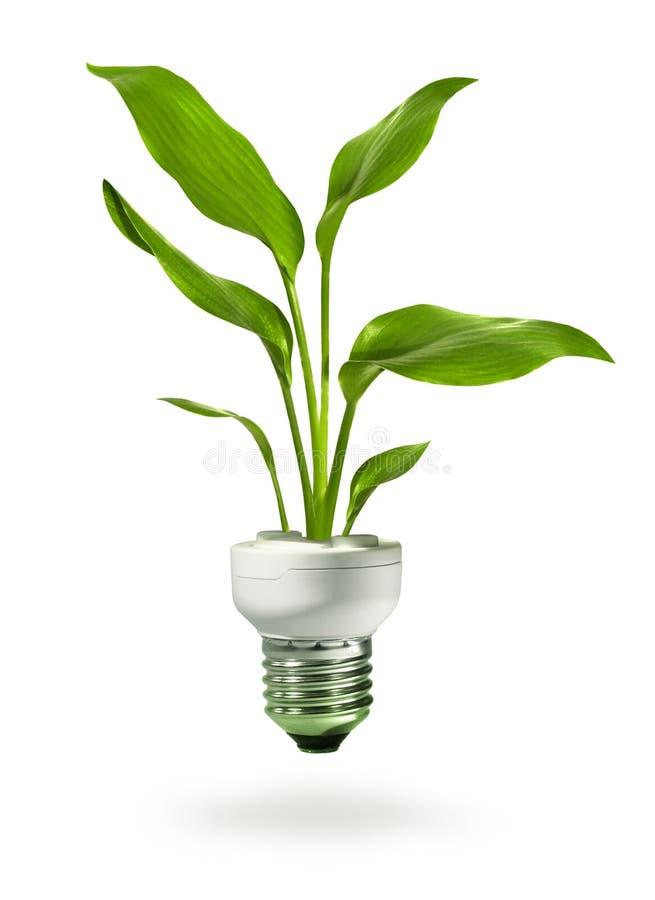 Crescimento verde da lâmpada do eco da economia de energia ilustração stock