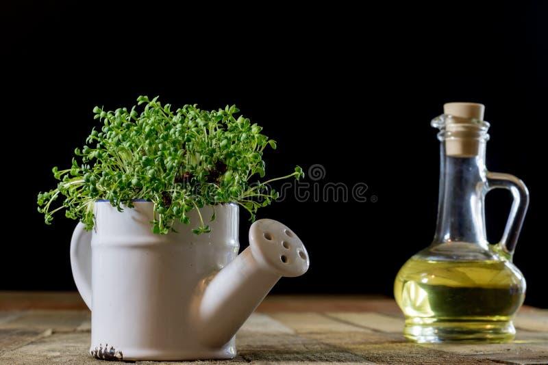 Crescione fresco dei germogli Terra nera Tabella di legno Vaso da fiori in Th immagine stock libera da diritti