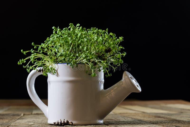 Crescione fresco dei germogli Terra nera Tabella di legno Vaso da fiori in Th fotografie stock libere da diritti