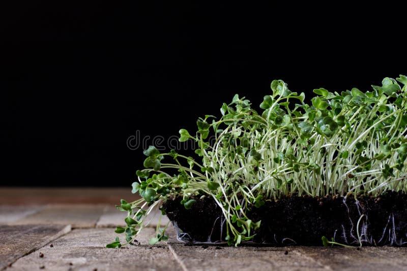 Crescione fresco dei germogli Terra nera Tabella di legno Vaso da fiori in Th immagini stock libere da diritti