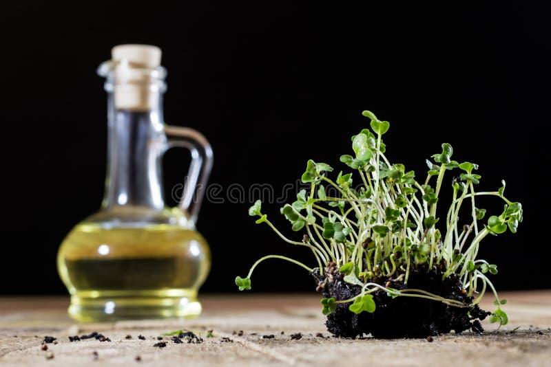 Crescione fresco dei germogli Terra nera Tabella di legno Vaso da fiori in Th fotografie stock