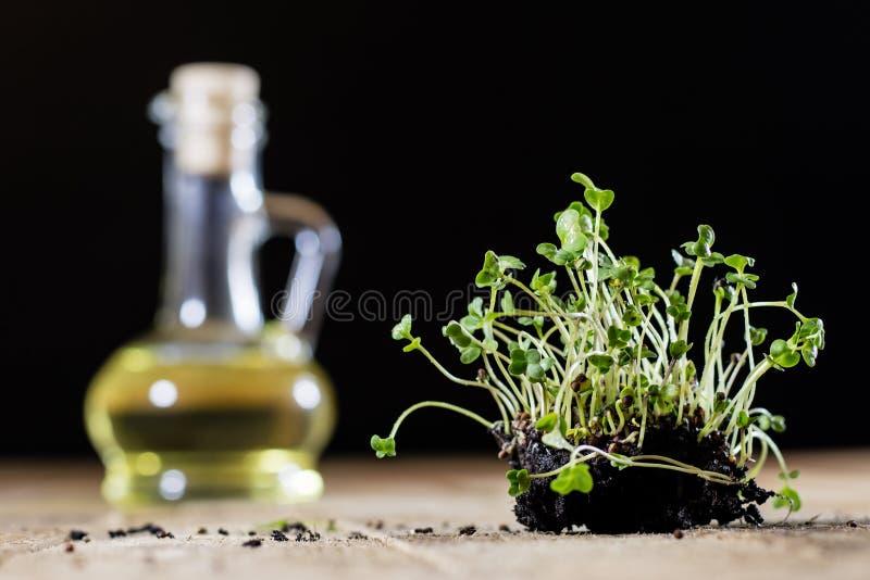 Crescione fresco dei germogli Terra nera Tabella di legno Vaso da fiori in Th fotografia stock libera da diritti