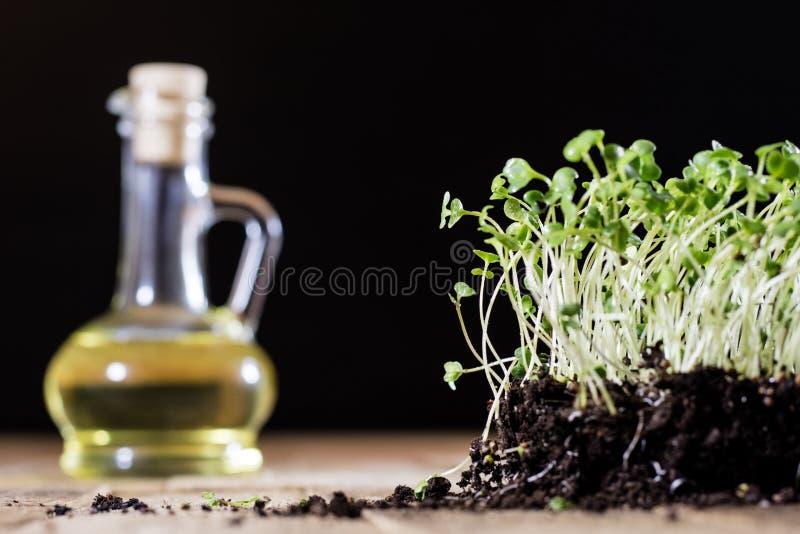 Crescione fresco dei germogli Terra nera Tabella di legno Vaso da fiori in Th immagini stock