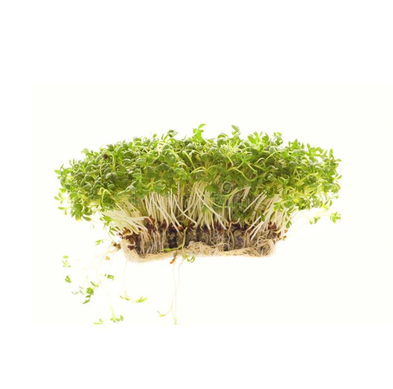Crescione isolato su bianco fotografia stock libera da diritti