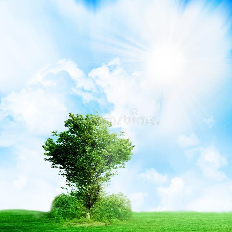Download Crescita fotografia stock. Immagine di bello, cumulus - 7306438