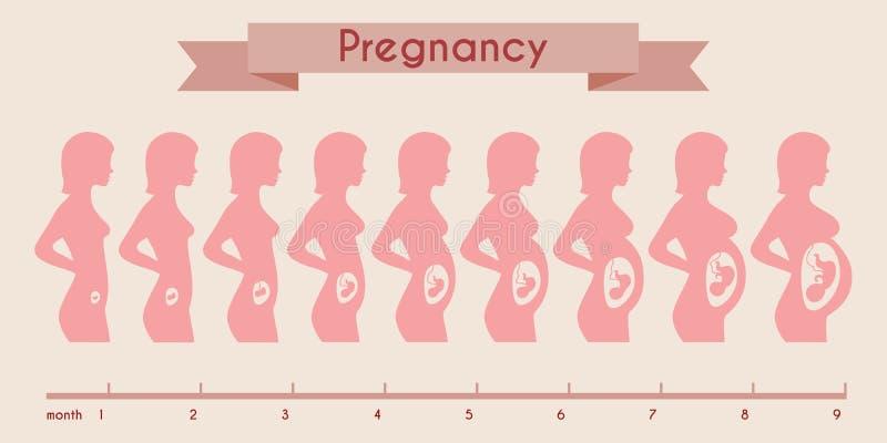 Crescita del feto umano con la siluetta femminile dentro illustrazione vettoriale