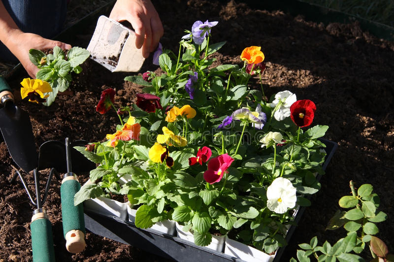Crescita di fiori di inverno immagini stock libere da diritti