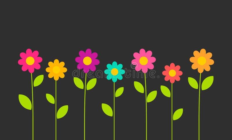 Crescita di fiori variopinta delle margherite sul fondo nero royalty illustrazione gratis