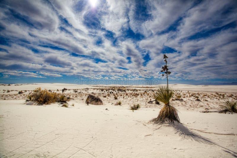 Crescita di pianta nel deserto del New Mexico fotografia stock libera da diritti