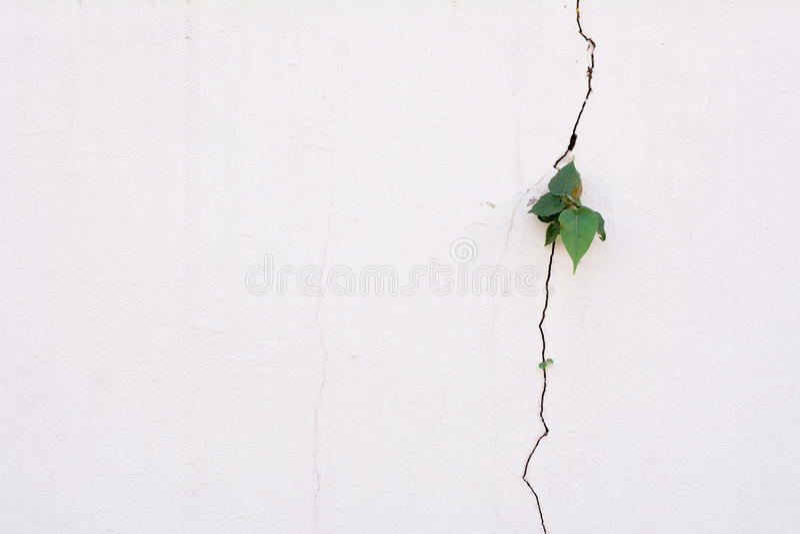 Crescita di plantula sulla parete della crepa fotografie stock