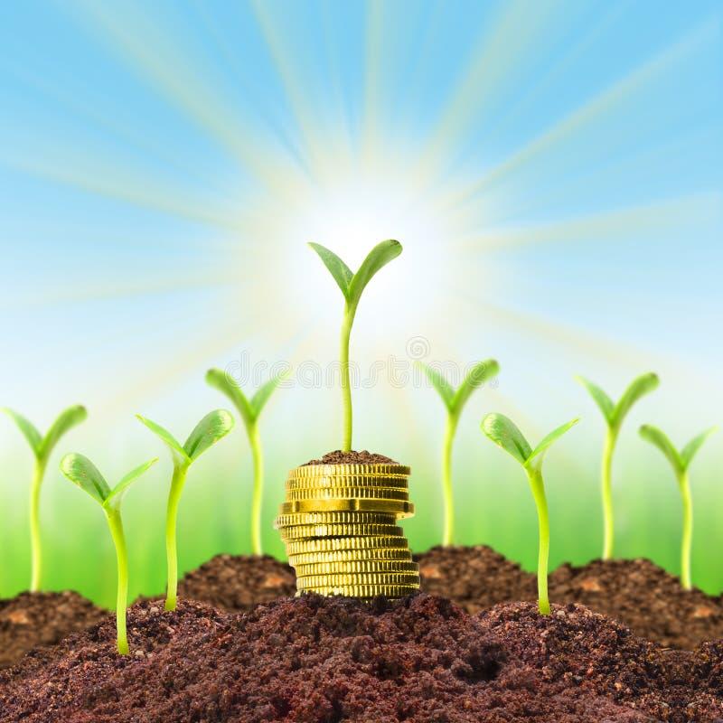 Crescita di soldi. fotografia stock libera da diritti