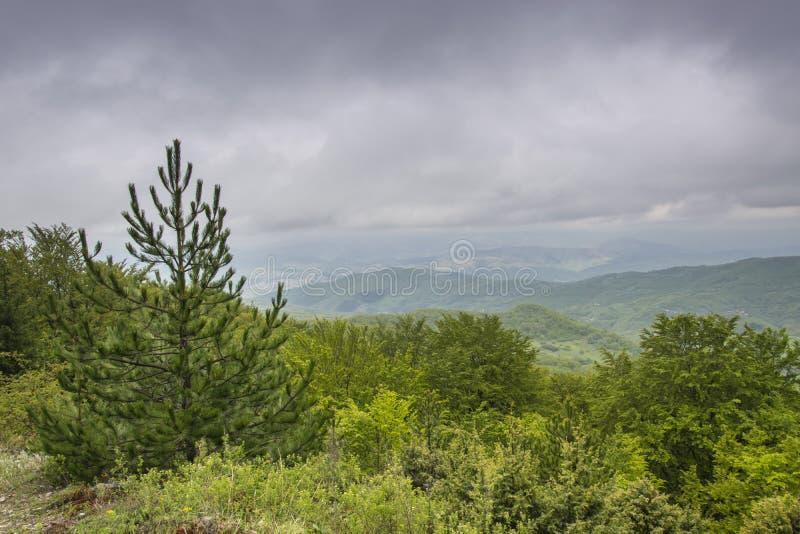 Crescita eccessiva verde della montagna 1 di Kopaonik immagine stock libera da diritti