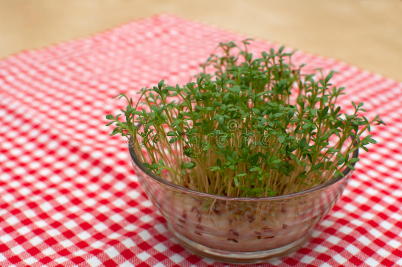 Download Cress Stock Photography - Image: 19259672