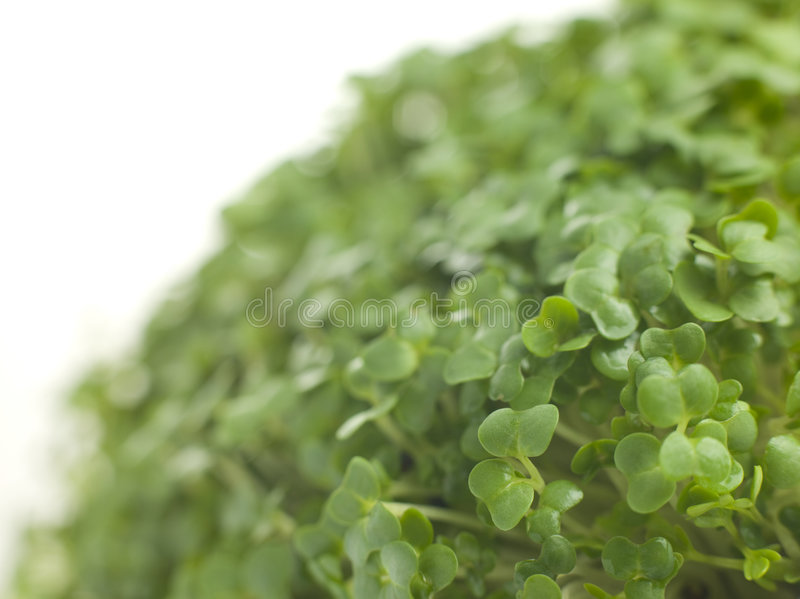 Download Cress Growing Stock Photos - Image: 7229823