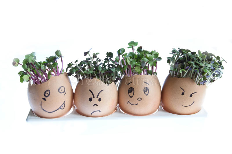 Cress Heads. Four egg shells with faces drawn on and used to grown mustard cress & radish cress as hair royalty free stock images