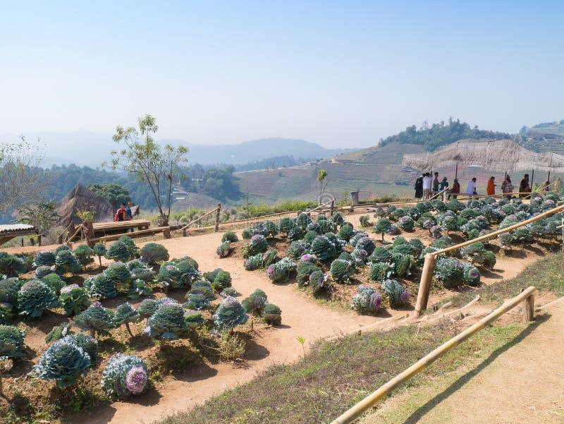 Cresta della collina di lunedì Cham - Chiangmai, Tailandia fotografia stock libera da diritti