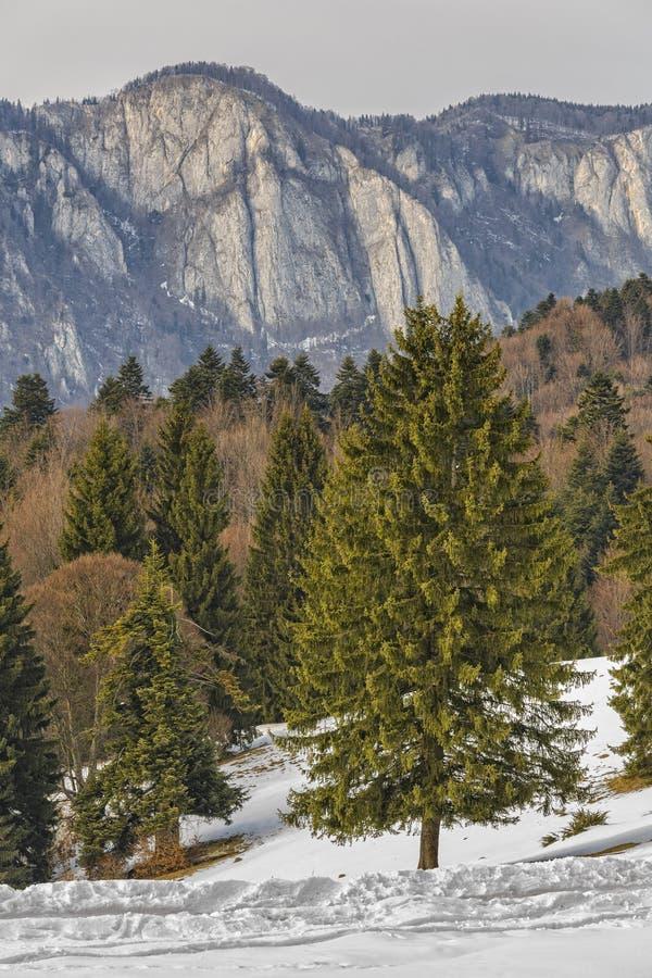 Cresta delle montagne di Postavaru fotografie stock libere da diritti