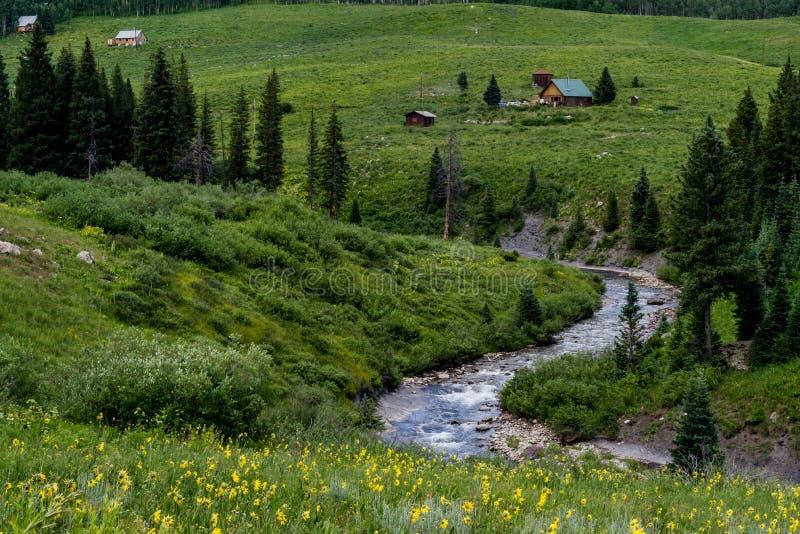 Crested ландшафт и wildflowers горы Колорадо butte стоковые изображения rf