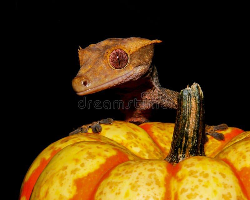 Crested Gecko Pumpkin royalty-vrije stock foto
