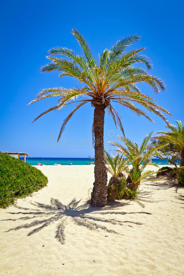 Download Cretan Date Palm Tree On Idyllic Vai Beach Stock Image - Image of lagoon, bush: 26657423
