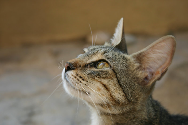 Download Crete / Cat Begging For Food Stock Photo - Image: 140890