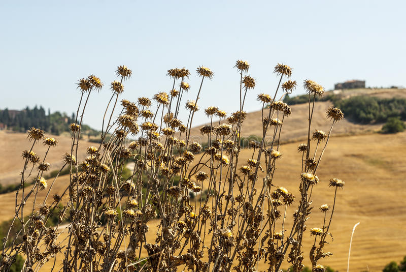 Download Crete Senesi, Characteristic Landscape In Val D'Orcia Stock Photo - Image: 30469976