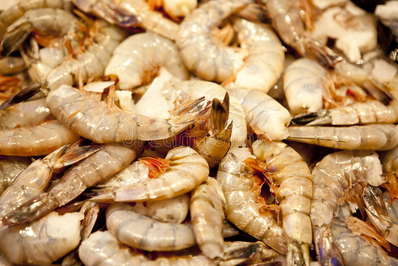 Crevette crue image stock