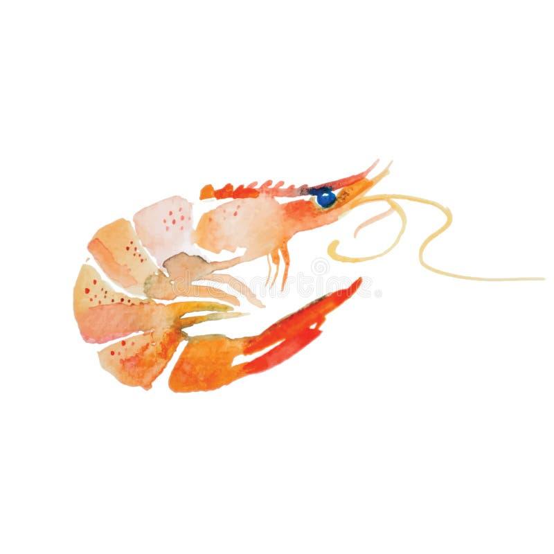 Crevette d'aquarelle illustration de vecteur