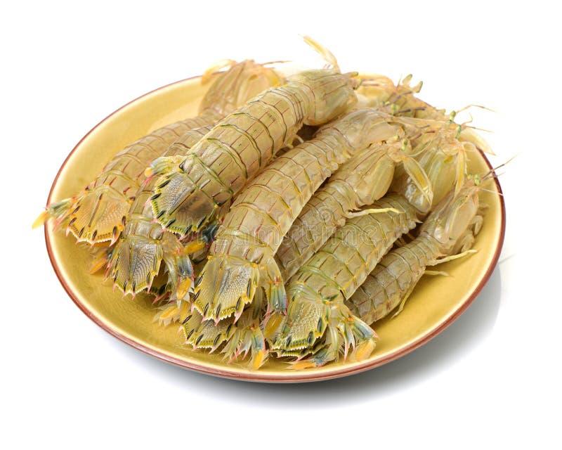 Crevette de mante photo stock