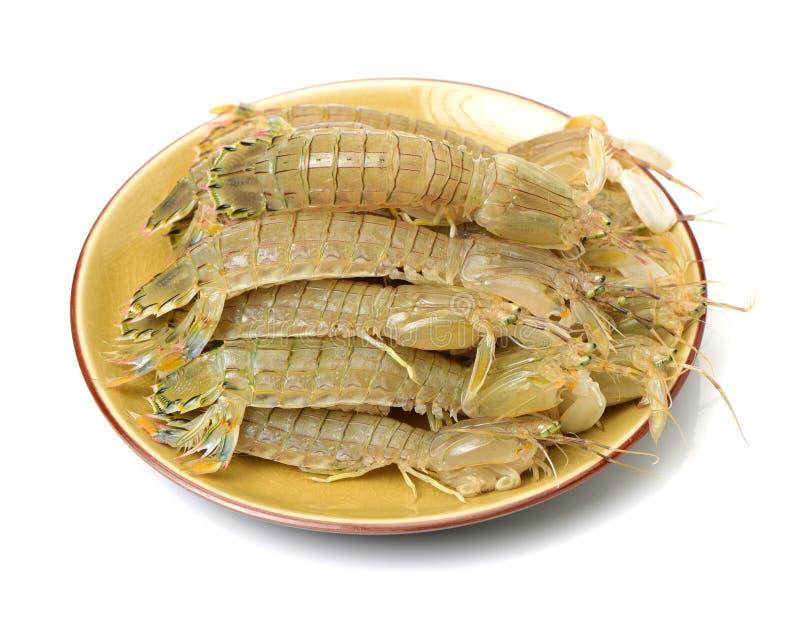Crevette de mante photo libre de droits