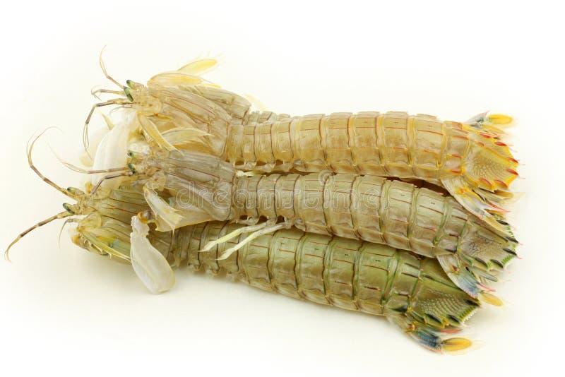 Crevette de Mantis image libre de droits