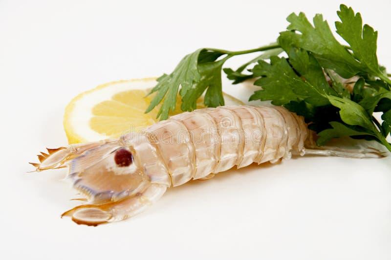 Crevette De Mantis Photo libre de droits