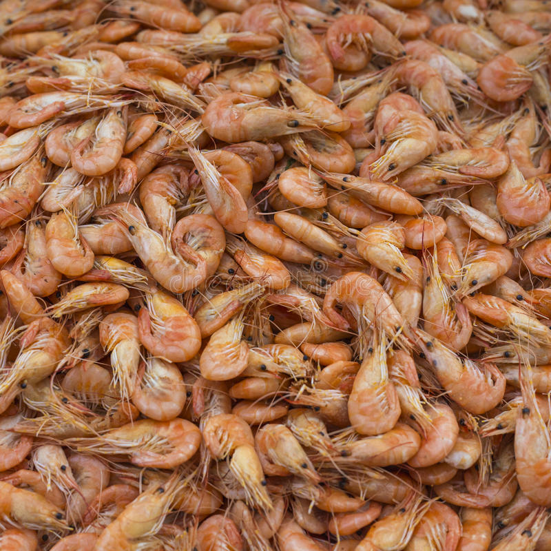 Download Crevette Fraîche à Au Marché Extérieur De Fruits De Mer Photo stock - Image du norway, froid: 76085452