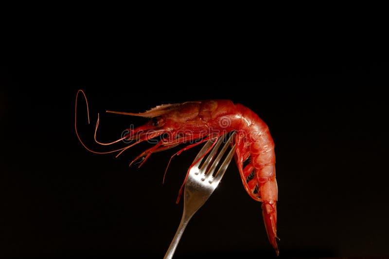 Crevette fraîche rouge sur une fourchette images stock