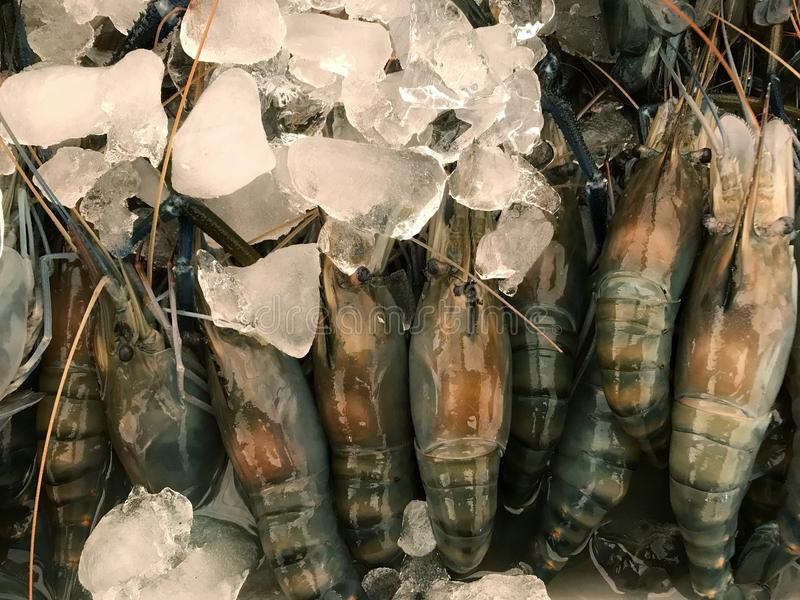 Crevette rose d'eau douce géante crue photos libres de droits