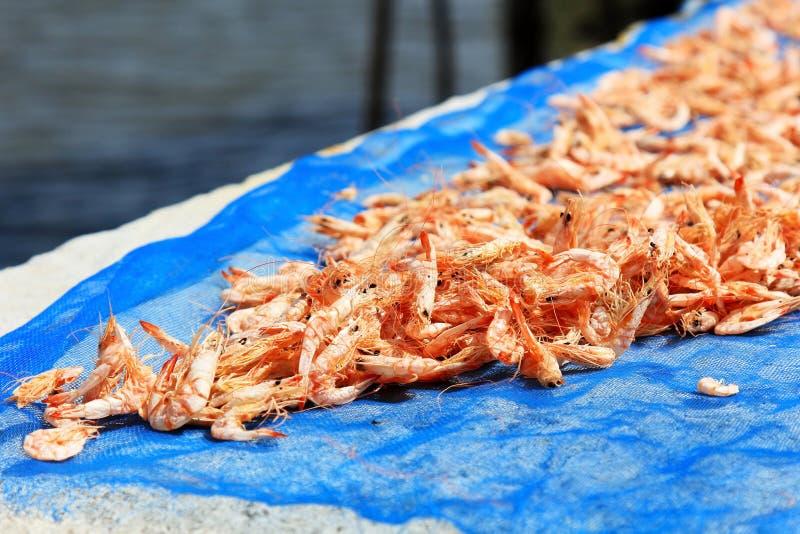 Crevette sèche en Thaïlande photographie stock libre de droits