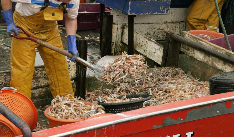 Crevette sur le bateau image stock