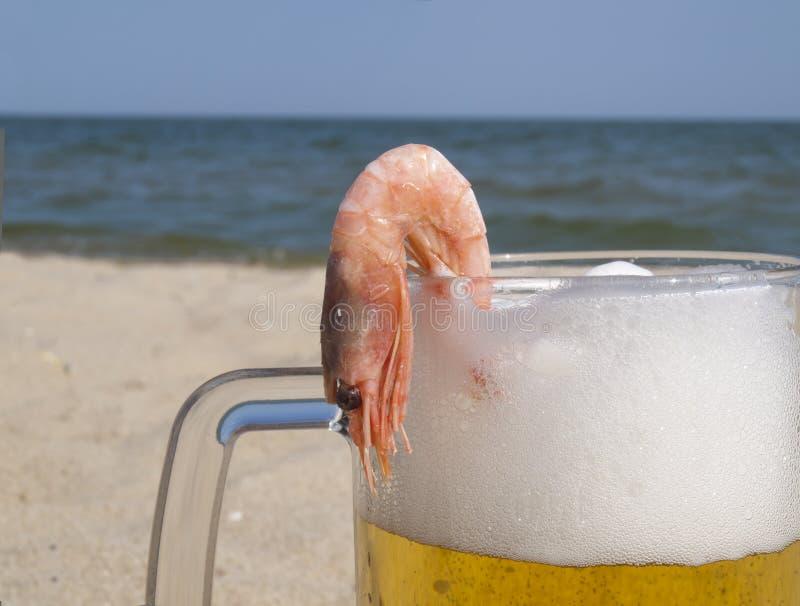 Crevette sur une glace avec de la bière image stock