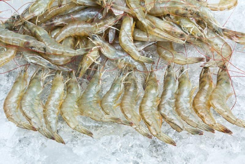 Crevettes blanches image libre de droits