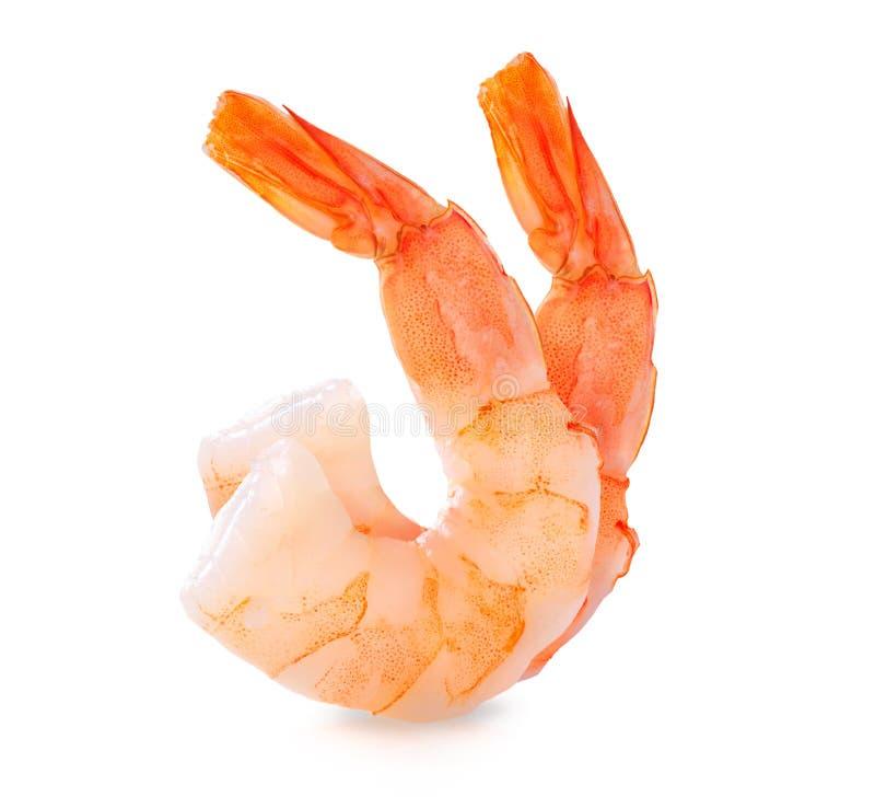 Crevettes. Crevettes roses d'isolement sur le blanc photographie stock