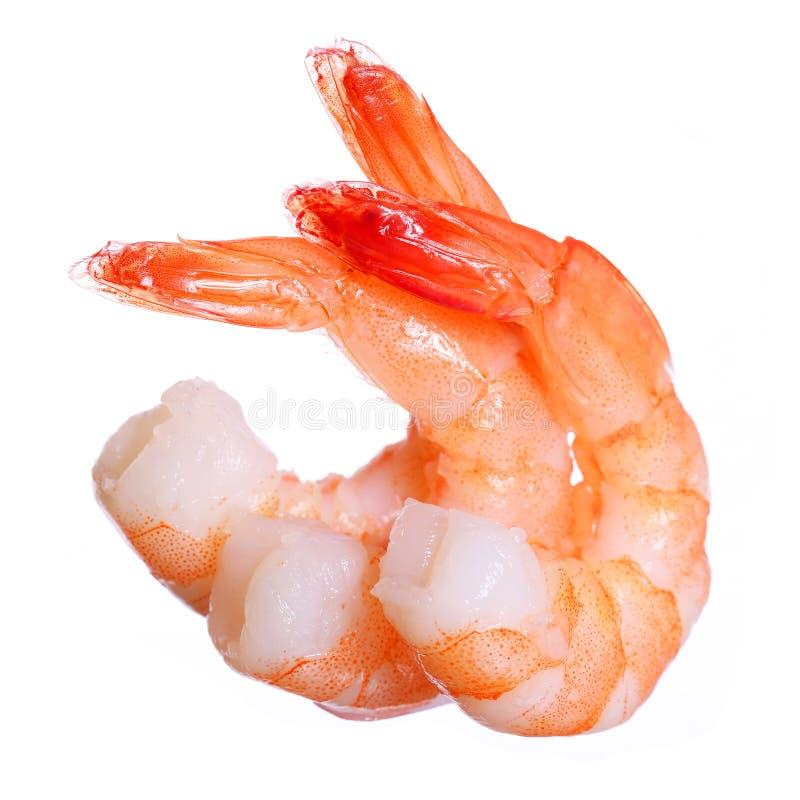 Crevettes d'isolement. Fruits de mer images libres de droits