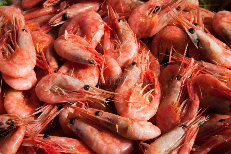 Crevettes roses fraîches crues dans une grande cuvette image stock