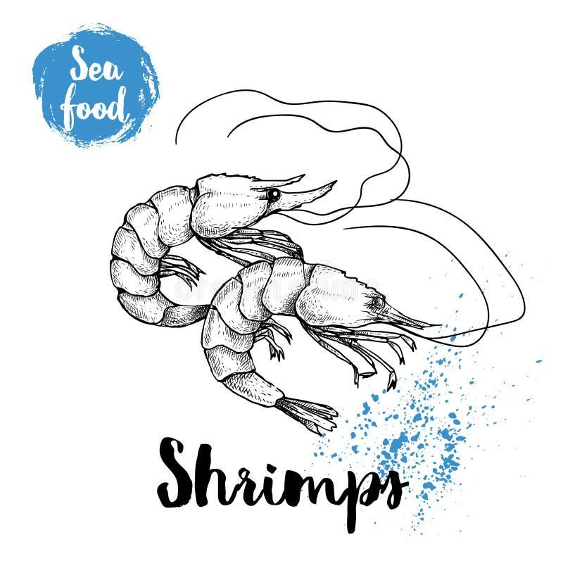 Crevettes tirées par la main de croquis d'isolement sur le fond blanc Illustration de vecteur de symboles de fruits de mer Crevet illustration libre de droits