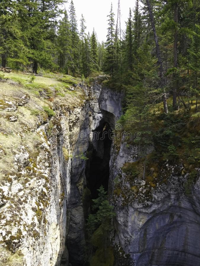 crevice в древесинах стоковое изображение