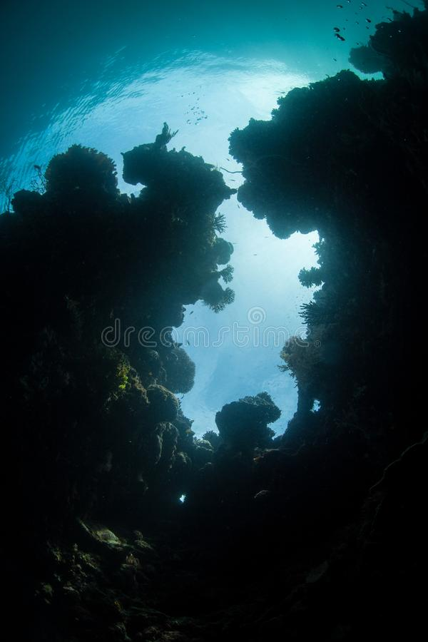 Crevice кораллового рифа в радже Ampat стоковое изображение