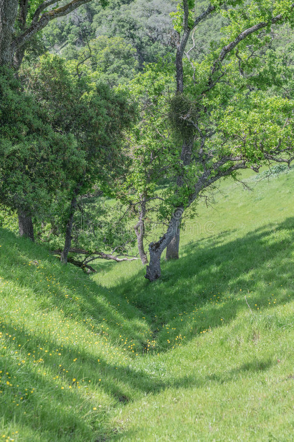 Crevice луга стоковые изображения rf