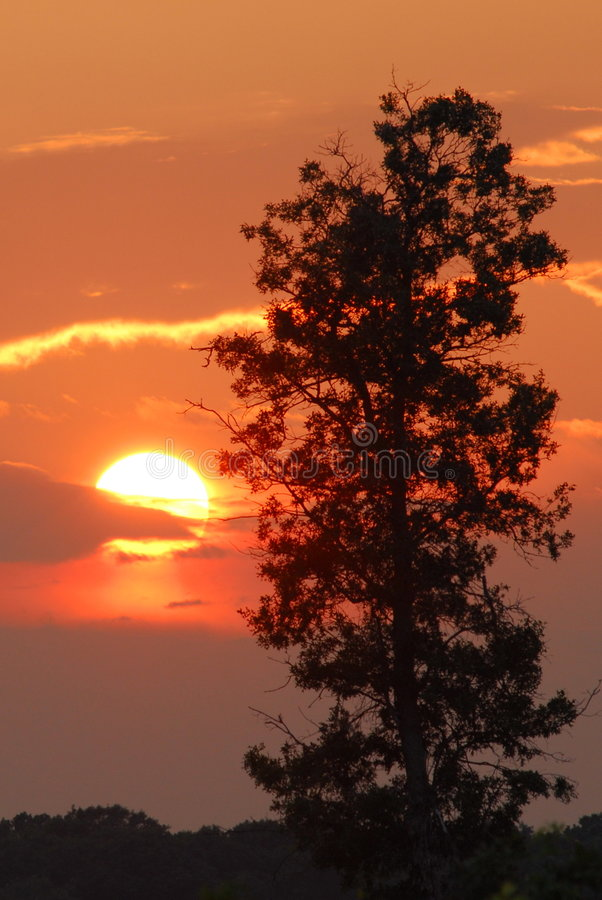 crex łąk słońca zdjęcie stock