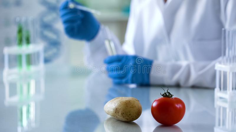 Criação de animais genética na agricultura, vegetais na tabela do laboratório, cientista que faz testes fotografia de stock