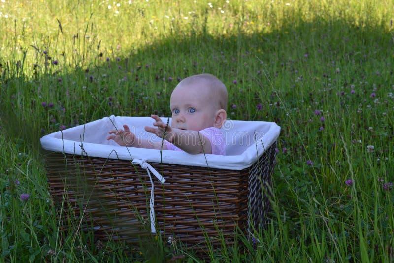 A criança alcança para fora em uma cesta de vime imagem de stock royalty free